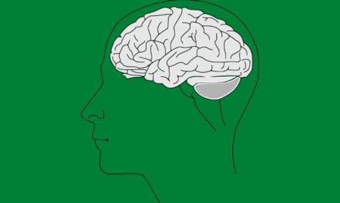 理系は就職、収入で圧倒的に有利だった 理系脳・文系脳の特徴と診断方法